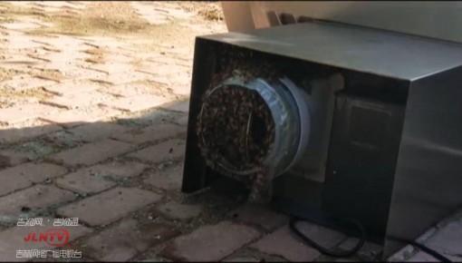 长春一市民家油烟机管道引来一窝马蜂  消防紧急除患!