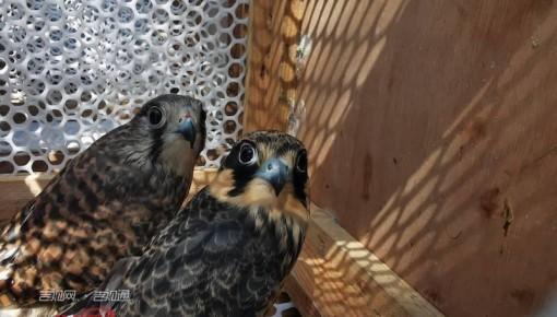 长春:爱心救护助鸟儿重返自然