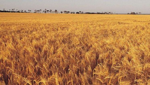 今年糧食有望再獲豐收