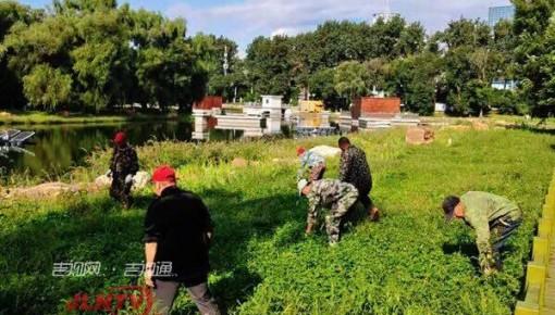 长春市南湖公园清理豚草进行时