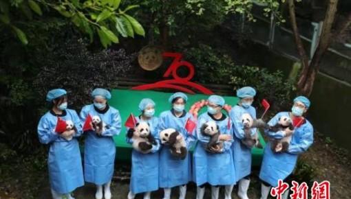 2019年7只成都新生大熊猫集体亮相