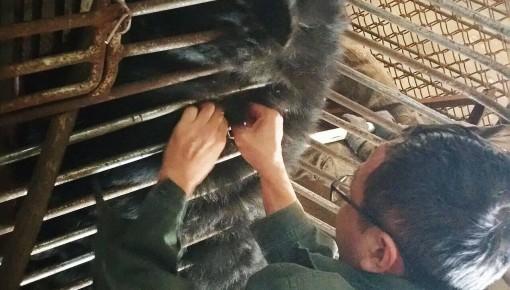长春动植物公园给黑熊植入芯片,为啥?