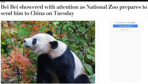 【中國那些事兒】旅美熊貓貝貝回國 美國粉絲:我們會很想念貝貝 熊貓外交請繼續