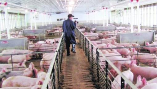 农业农村部:年底前全国生猪存栏有望止降回升