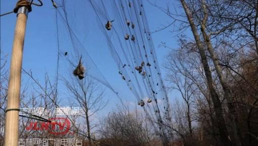 通化市森林公安局成功破获一起特大非法狩猎案