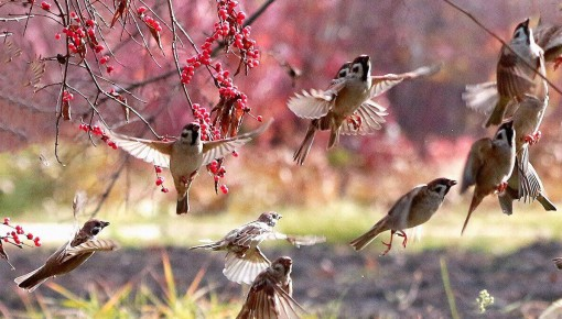 候鸟齐聚长春公园 摄影爱好者千万别错过