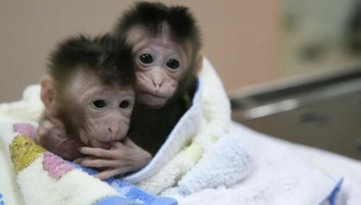 """我国科学家重现猴子一生中""""最重要的时刻"""""""