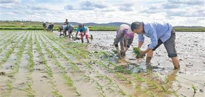 """联合国粮农组织—中国南南合作计划成立10周年取得实质性成果  """"加强合作,把中国减贫经验传播到世界各地"""""""