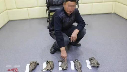 捕杀濒危野生动物 抚松一男子被刑拘