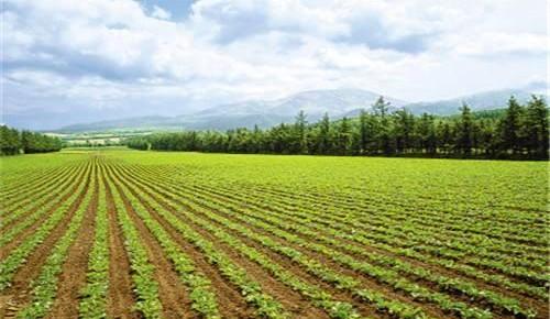 耕地質量提升 種糧底氣十足 今年將建成八千萬畝高標準農田