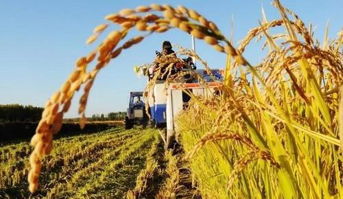 今年農閑長春市計劃培訓8萬新農人