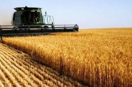 大丰收!吉林省今年粮食总产量达775.6亿斤,净增量居全国首位