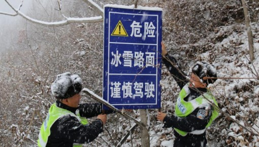 """暴雪来袭!且看雪中那可爱的""""一抹绿"""""""