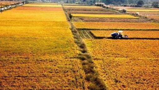 """今年粮食生产实现""""十六连丰"""" 产量达13277亿斤"""