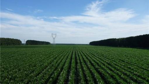 """粮食增产""""全国第一""""!新华社聚焦吉林加快推进现代农业发展  """