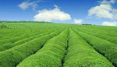 河北农业生产一线见闻