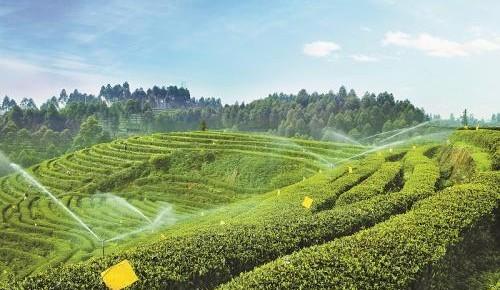 四川省加快推动农业领域复工复产