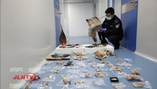 """严禁""""野味上餐桌""""!吉林省破获20起破坏野生动物资源案"""