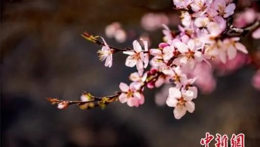 今日雨水|又見神州春風拂面,共盼疫情冰雪消融