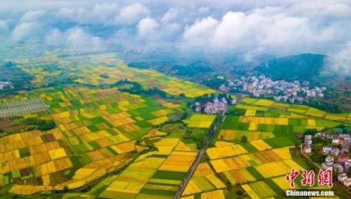 农业农村部:分区分类推进在建高标准农田项目复工