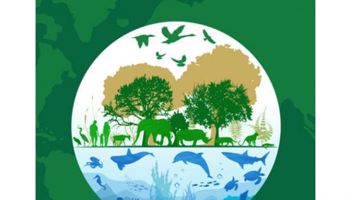国家林草局:我国濒危野生动植物种群总体稳中有升