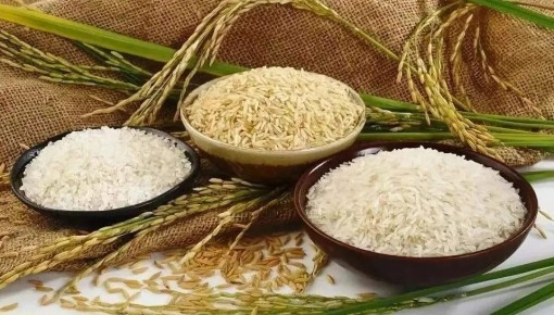 【微科普】粮食总产量再创新高!我们的粮袋子发生了哪些变化?