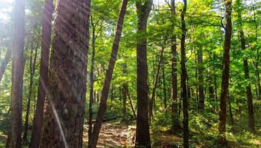 8899.3亿!吉林省森林生态系统服务功能评估报告出炉