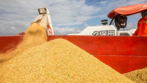 多国限制粮食出口,人们恍然大悟:中国这个政策坚持得太对了!