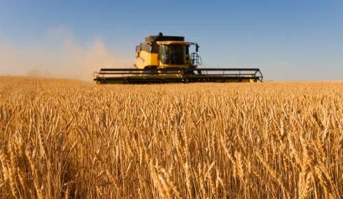 我國糧食增產保供能力將穩步提升
