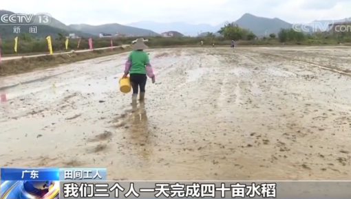 廣東:3200萬畝春耕農田春播計劃已完成6成