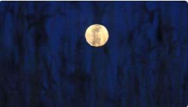 """今年最后一次""""超级月亮""""将于7日现身天宇"""