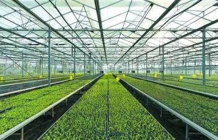 2020年国家现代农业产业园创建名单公布,吉林省一家上榜