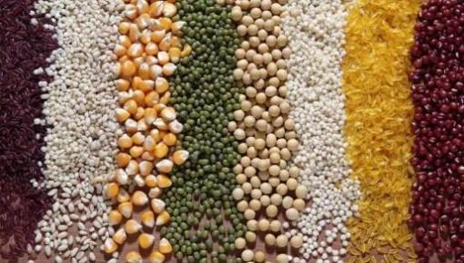 全国政策性粮食库存数量和质量大清查结果表明——我国粮食库存充足数量真实可靠