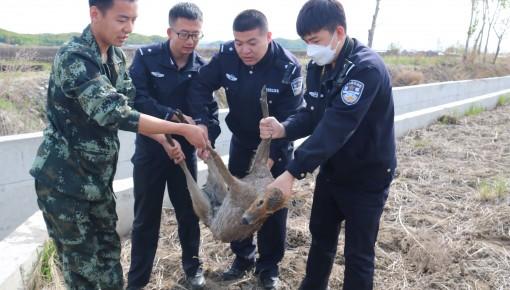 """敦化市:河麂水渠""""落难"""" 民警协力相救"""