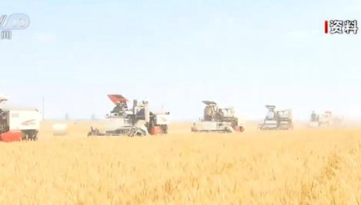 我國夏糧主要作物小麥由南向北梯次進入集中收獲期