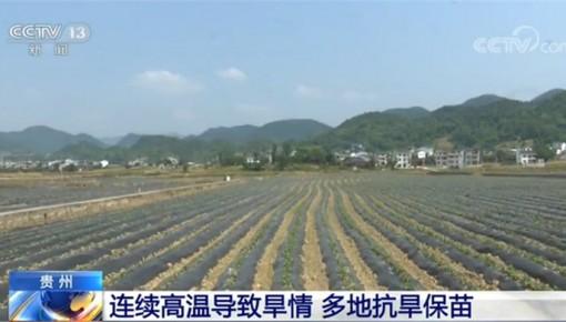 贵州省思南县:27个乡镇集中连片种植红薯2万多亩