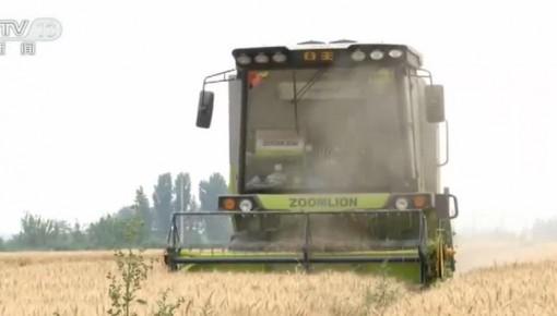 小麥種植結構持續調優 華北主產區迎來麥收高峰
