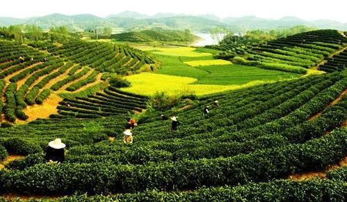 农业农村部:一季度农产品质量安全例行监测合格率达97.9%