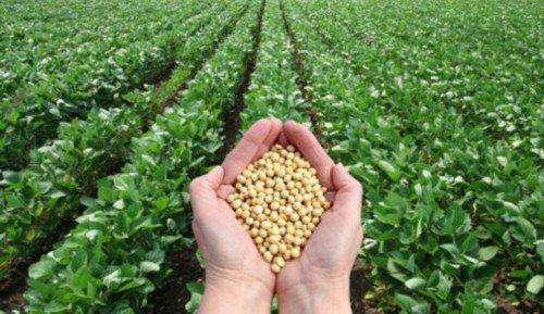 中國科學家領銜團隊發現大豆高產高質關鍵基因