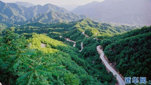 兩部門:到2035年實現全國森林覆蓋率達到26%