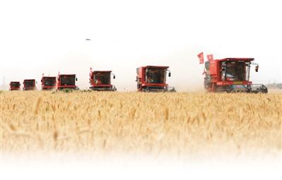 1.7億畝!全國麥收進度過半 黃淮海主產區機收率超98%