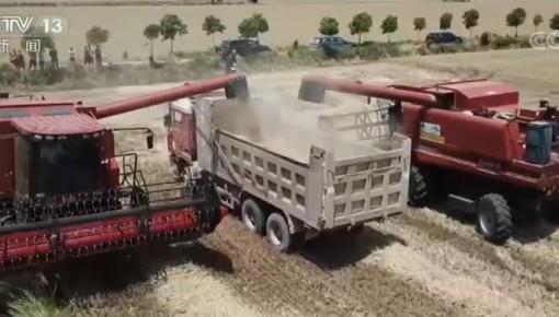 麦收一线观察:小麦品质好于常年 实现优质优价