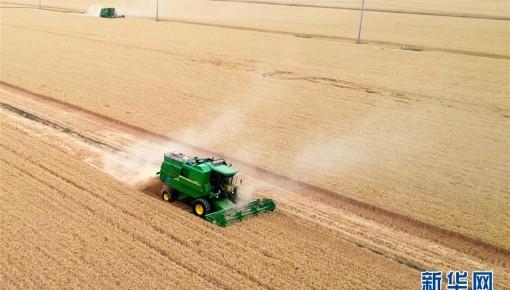 庚子之豐——2020年河南夏糧豐收圖景