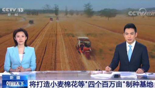 """新疆将打造小麦棉花等""""四个百万亩""""制种基地"""