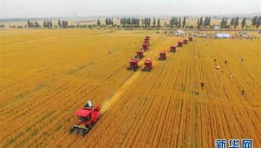 夏糧豐收已成定局!預計小麥畝產平均提高4公斤