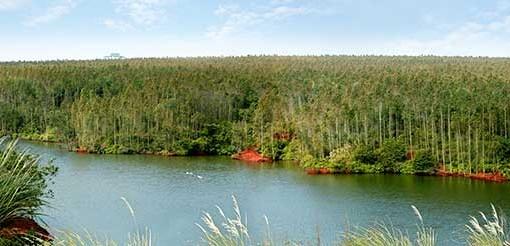 國家林草局:20年來我國退耕還林還草5.15億畝