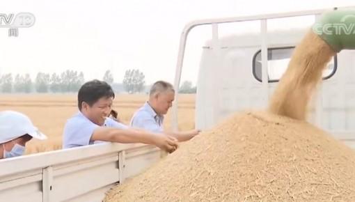 麦收一线观察:麦收进度近六成 优质专用小麦面积扩大
