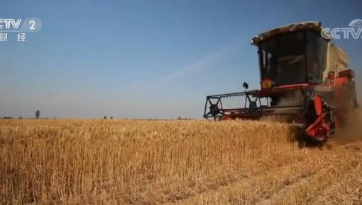 科技興糧、綠色興糧 力促糧食生產穩產提質