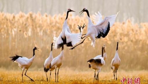 文化和自然遺產日來了 這些珍貴世界遺產你了解多少?