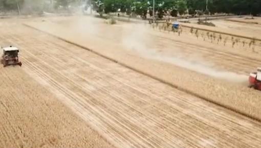 """""""三夏""""时节至 各地麦收忙"""